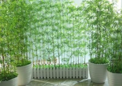 Cách trồng cây trước nhà đúng phong thủy